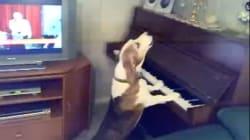 Nouveau virtuose.. canin celui-là!