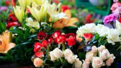 Plaidoyer d'un fleuriste avalé par le