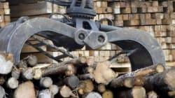 Les États-Unis veulent imposer une taxe rétroactive sur le bois