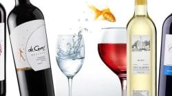 Une dizaine de bons vins entre 10$ et 11$ (oui il y en