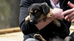 Un Canadien clone son chien pour 90