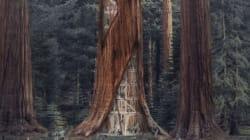 Les futurs gratte-ciels aménagés dans des troncs d'arbres