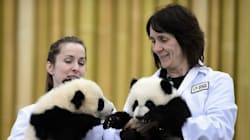 Staff At Canada's Largest Zoo Walk Off The