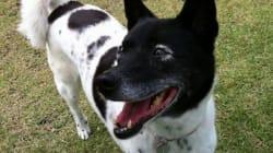 幸せを呼ぶ元保護犬「リュネット」 新しい家で穏やかに笑う