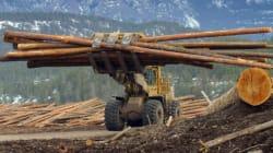 La société forestière québécoise Tembec achetée pour 807 M$