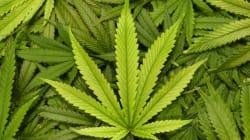 Légalisation du cannabis: Couillard prive les coffres de l'État de milliards de
