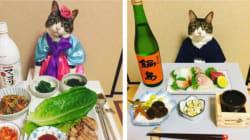 Maro, le chat gourmand qui nous fait tous