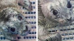 Vancouver Aquarium Treating Rescued Seal