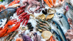 IUU漁業の撲滅を目指して、メディア向け勉強会を開催