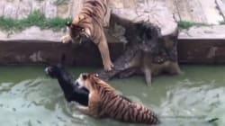 Indignation à la suite de cet acte de cruauté animale dans un zoo de