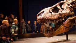 Une étude suggère que le tyrannosaure était couvert d'écailles et non de
