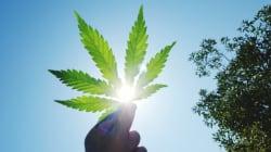 Légalisation du cannabis: prudence avec un grand