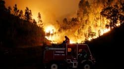 Un violent feu de forêt fait au moins 62 morts au