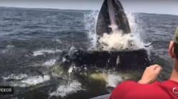 Il n'aurait pas pu voir une baleine de plus