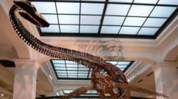 自由研究におすすめ! 夏休みにぴったりな博物館、科学館イベント(関東)