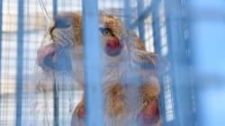 シリアの動物園に取り残された13匹の動物、飢え死にする前に救出される