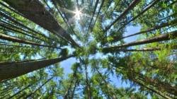 森林セミナー「持続可能な天然ゴムの生産と調達」 開催報告
