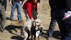 SEE: Alberta Wildrose Leader Caught In Compromising
