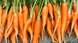 Jour de la carotte: Nos stars à la peau