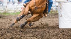 Horse Racing Towards a Better