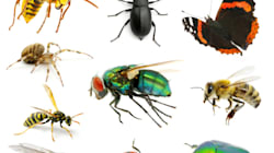 Good Bugs For Your Home: Not All Of Them Are Out To Get You