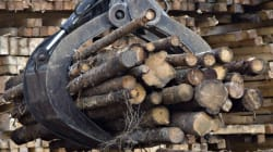 Powerful U.S. Lumber Lobby Could Stomp Canada's Trade