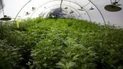 Legal Pot Grow Ops Coming To