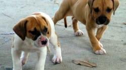 Puppies Help Lost Boy Survive In