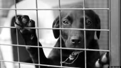 Protection des animaux: au-delà de