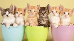 Les vidéos de chats à l'honneur dans un festival aux États-Unis