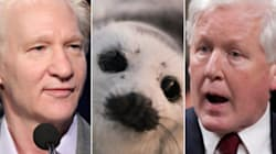 Rae to Maher on Seal Hunt: Blubber, Blubber,