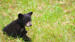 WATCH: Couple Rescues Baby Bears Trapped In