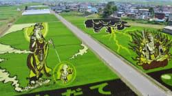 Dibujos en campos de arroz