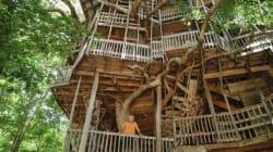 Vivre dans un arbre-cathédrale aux