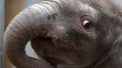 Le zoo de Beauval accueille
