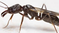 Des milliers d'insectes ont pris d'assaut le Stade olympique