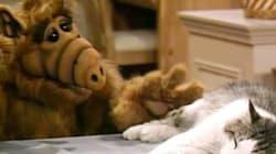 Alf l'extraterrestre a droit à son