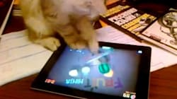 Un chat joue à Fruit Ninja sur