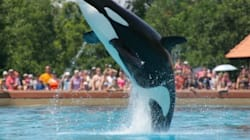 The Marineland Mom Has Turned Her Son into a