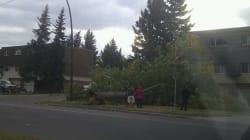 WATCH: Wind Storm Rolls Through Calgary, Downs Trees