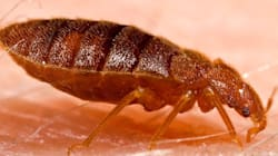 Ewww! Bed Bugs On The