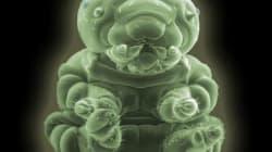 Esto es una oruga: el mundo a través del microscopio electrónico