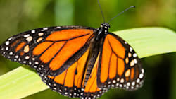 What the Butterfly Effect Means For Canada's Foreign