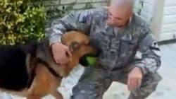 Cani che ritrovano i padroni dopo mesi (VIDEO