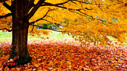 How And Why The Leaves Change