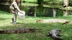 Robert Irwin, il figlio di Mr Crocodile sulle orme del padre gioca con i coccodrilli