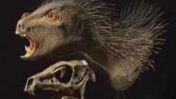 Scoperto il dinosauro