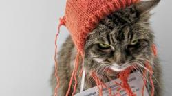 LOLcat, l'exposition à voir à