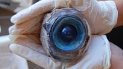 Un mystérieux oeil retrouvé sur une plage de