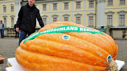 Ecco le zucche più grandi d'Europa
